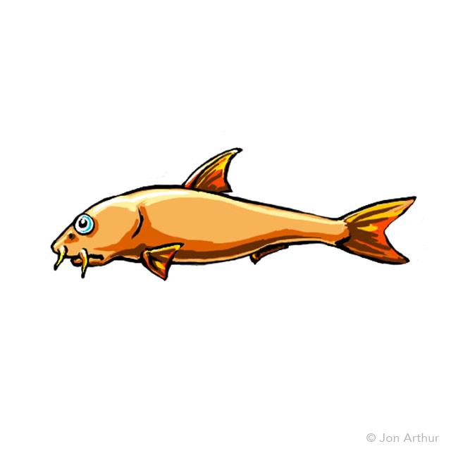 fish-plate-barbel