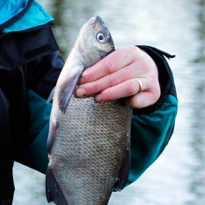 Image courtesy of Coarse Fishing Answers.